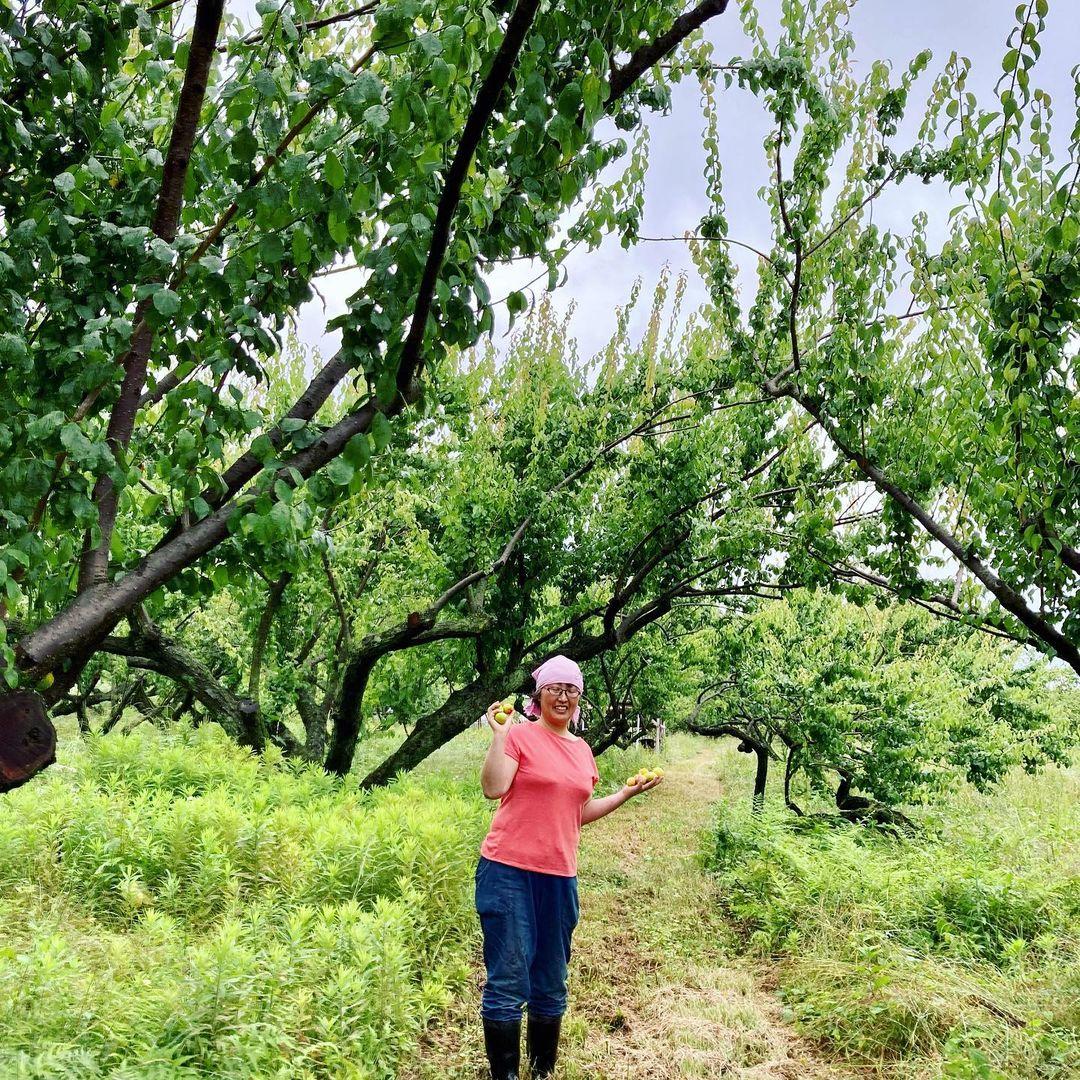 〈梅農家・岩田紀子さん〉「自然栽培梅農家・岩田紀子さんと『瓶干し梅干し』を作ろう!」(6/30オンラインレッスン)(2021.06.30)